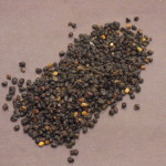 Sambucus Nigra (Elder Berry) Organic Dried Fruit
