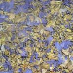 Nymphaea Caerulea (Blue Lotus) Organic Flowers