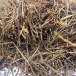 Banisteriopsis Caapi  (Yage, Peruvian Black) Vine, Shredded
