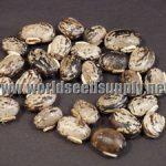 Mucuna Pruriens (Velvet Bean / Cowitch) Seeds
