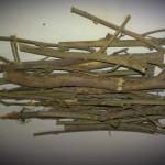 Sida Cordifolia (Bala) Stems