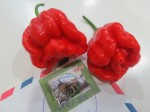 Capsicum Chinense (Trinidad Scorpion Moruga Pepper) Seeds