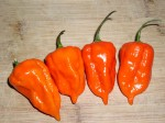 Capsicum Chinense (Morich Naga / Ghost Chili Pepper) Seeds