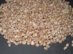 Argyreia Nervosa var. Nervosa (Hawaiian Baby Woodrose) seeds