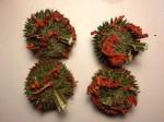 Leonotis Nepetifolia (Klip Dagga) - Whole Seed Pods
