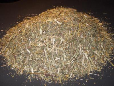 Eschscholzia Californica (California Poppy) Organic C/s Foliage