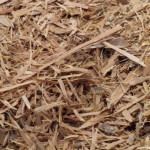 Erythroxylum Catuaba (Catuaba) Rootbark, Shredded