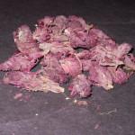Pedicularis Densiflora (Indian Warrior) Wildcrafted Flower Buds