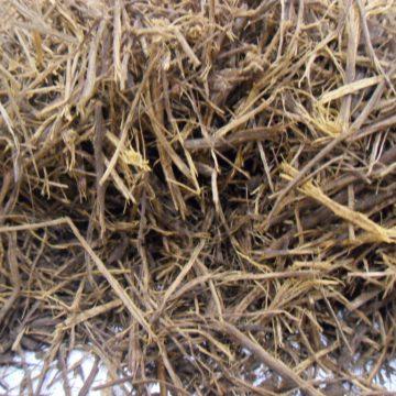 Banisteriopsis Caapi  (Yage, Peruvian Black) Vine Segments