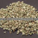 Tribulus Terrestris (Gokshura) Organic Seeds