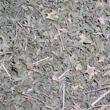 Lagochilis Inebrians (Turkish Mint) Herb