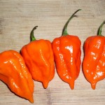 Capsicum Chinense (Morich Naga / Ghost Chili Pepper) Seeds by World Seed Supply