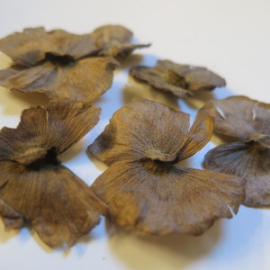 "Alicia Anisopetala (Black Yage / ""Banisteriopsis Caapi"") seeds by World Seed Supply"