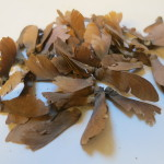 """Banisteriopsis Muricata (Red Yage / """"Banisteriopsis Caapi"""") seeds by World Seed Supply"""