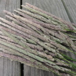 "Phalaris Arundinacea ""Yugo Red"" (Reed Canary Grass) Seed Heads by World Seed Supply"
