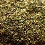 Pedicularis Racemosa (Parrot's Beak) c/s Herb by World Seed Supply