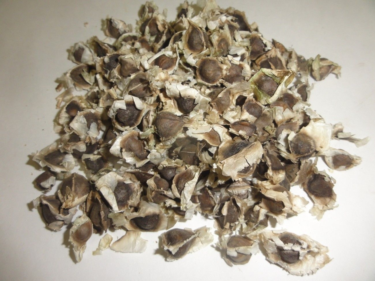 moringga seeds Moringa seeds are among the most versatile and nutritious seeds available they can be planted and grown, eaten directly.