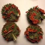 Leonotis Nepetifolia (Klip Dagga) - Whole Seed Pods by World Seed Supply