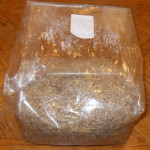 Mushroom Spawn Bags, Large Gusseted Myco Grow Bags by World Seed Supply
