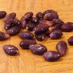 "Theobroma Cacao (Cocoa Beans) ""Criollo Variety"" Viable Seeds by World Seed Supply"