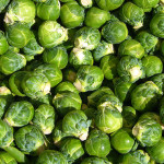 Brassica Olracea (Long Island Brussels Sprouts) - Non-GMO Seeds by World Seed Supply