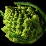 "Brassica Olracea (Romanesco ""Fractal Broccoli"" Cauliflower) Seeds by World Seed Supply"