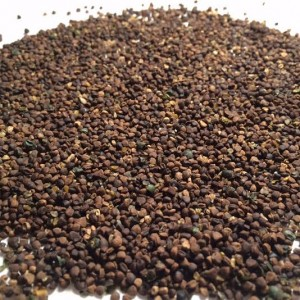 Gynostemma Pentaphyllum (Jiaogulan) Seeds by World Seed Supply