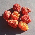 Capsicum Chinense (Carolina Reaper Pepper) Seeds by World Seed Supply