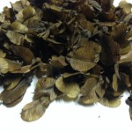 "Banisteriopsis Spp. (""Sky Blue"" Yage) seeds by World Seed Supply"