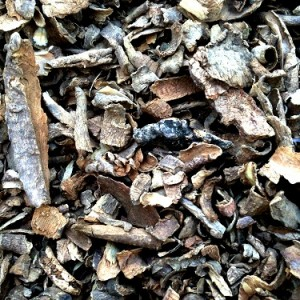 Voacanga Africana Rootbark by World Seed Supply