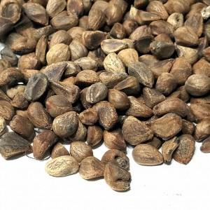 Ayurvedic Woodrose Seeds by World Seed Supply